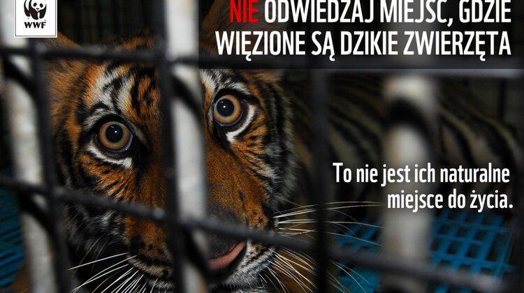 Jak pomóc dzikim zwierzętom w czasie wakacji?