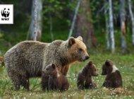 Jak spędzić wakacje w sąsiedztwie wilka i niedźwiedzia?