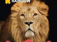 Rainbow Królem Egzotyki – nowa kampania reklamowa