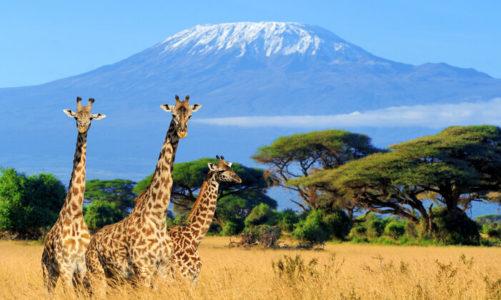 W sobotę 12 grudnia wyleciał pierwszy w tym roku czarter Rainbow do Kenii